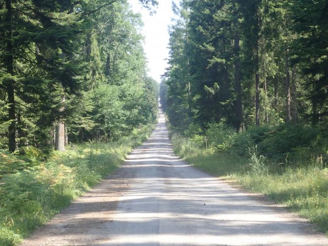 Poland forest